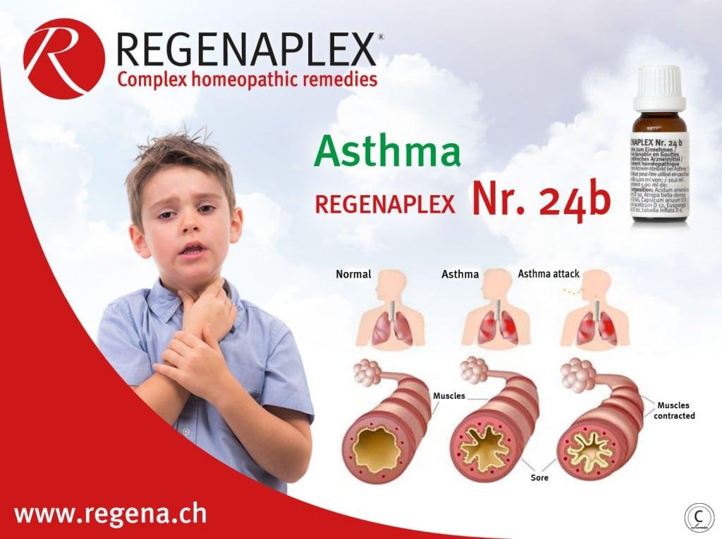 REGENAPLEX Nr 24b Asthma - EN